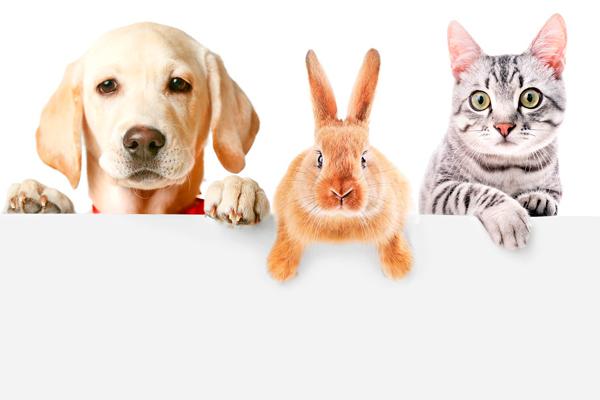 Животные и товары для них